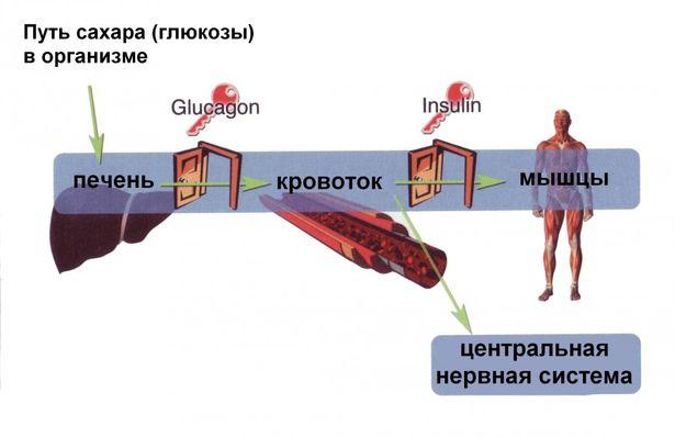 влияние повышенного холестерина на организм