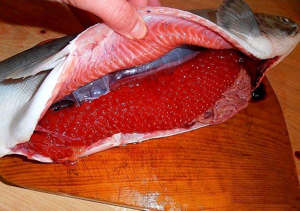 красная икра из какой рыбы самая вкусная