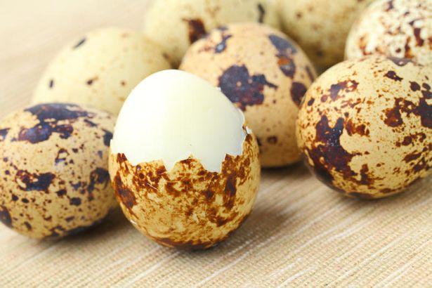 Перепелиные яйца: описание, фото и полезные свойства