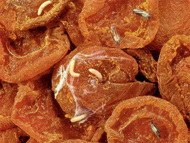 Личинки пищевой моли в сухофруктах