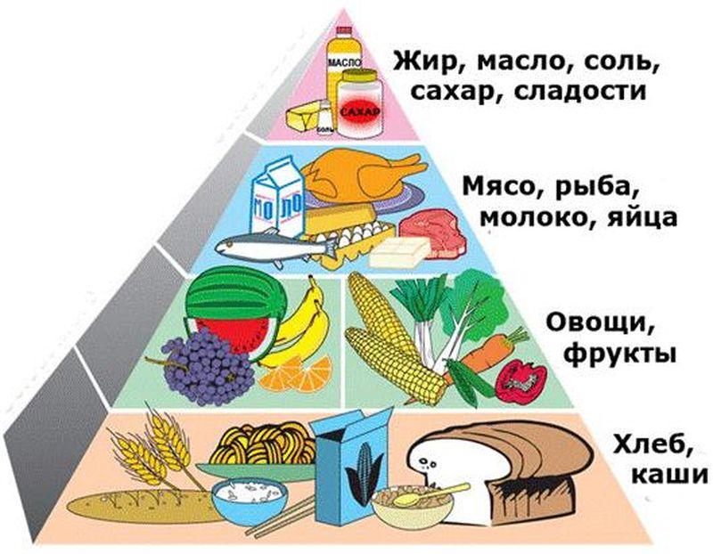 Классификация и виды продуктов питания растительного и животного  Классификация и виды продуктов питания растительного и животного происхождения