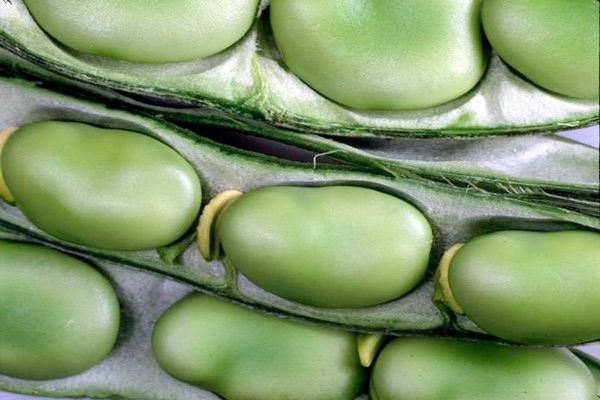 Полезные свойства бобовых