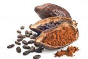 Плод дерева какао