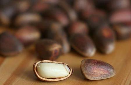 Кедровый орех: фото и описание, состав, калорийность