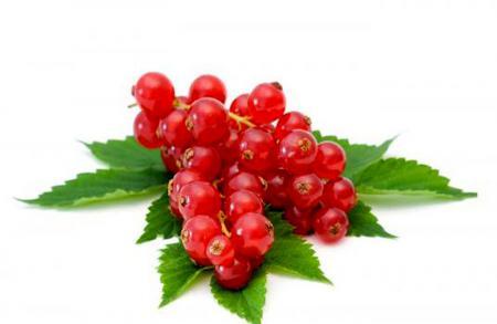 Красная смородина полезные свойства для здоровья