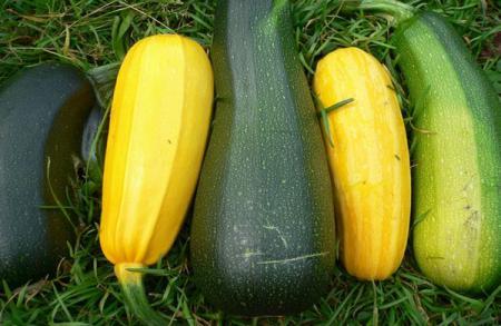 Кабачок: описание овоща, фото, состав, калорийность