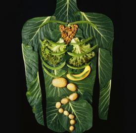 Путь пищевого комка
